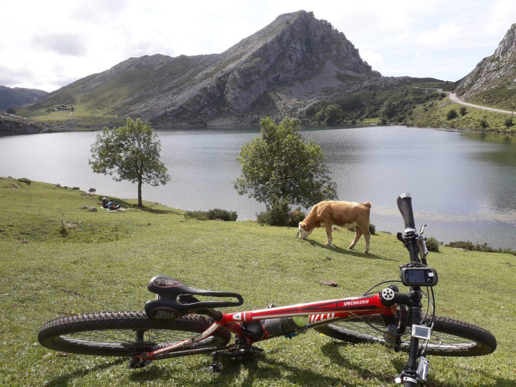 La ruta BTT Picos de Europa es una ruta por etapas perfecta para los bikers más exigentes. Con salida en el Cantábrico, la ruta se adentra en el Parque Natural Reserva de Saja-Nansa para terminar en el Parque Nacional de Picos de Europa.